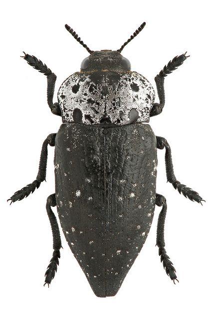 http://bedbug9999.newsvine.com/_news/2013/05/12/18216175-choosing-bed-bugs-exterminators
