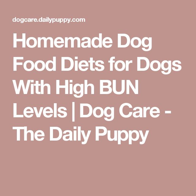 Homemade Dog Food Diets for Dogs With High BUN Levels | Dog Care - The Daily Puppy
