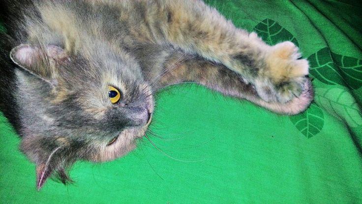 Am I cute? #cat #pet