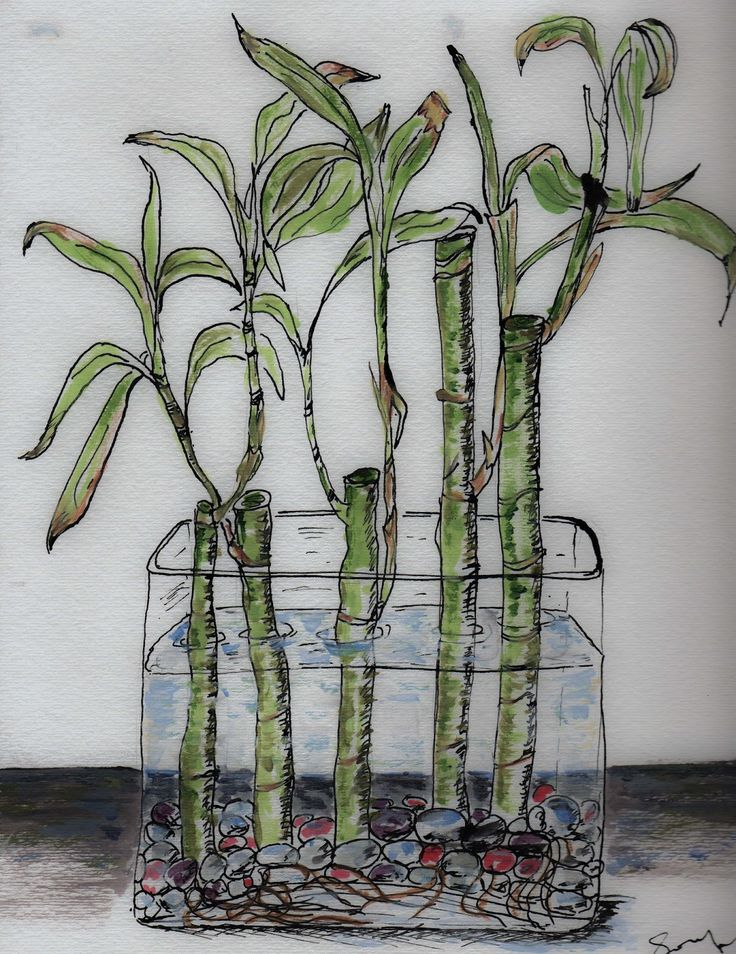 Nature and Art : Lucky Bamboo