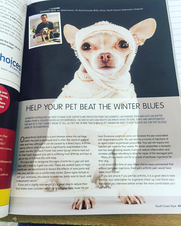 northnowravet_and_jervisbayvetCheck out our latest article 'Help your pet beat the Winter Blues' #southcoaststyle #winterpets #northnowravet #jervisbayvet #shoalhaven #arthritispets