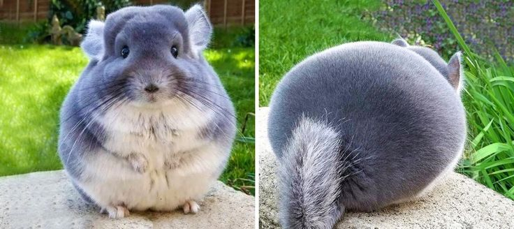 16Unbelievably Cute Animals that Will Take Over the World