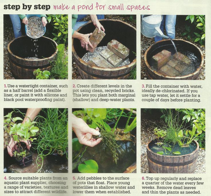The 25 best Mini pond ideas on Pinterest Container fish pond