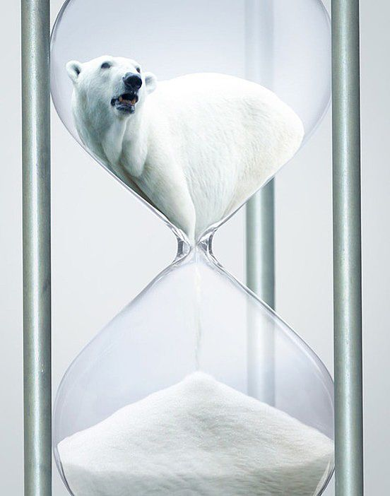 Polar Bear Campaign | Awesome Design Inspiration