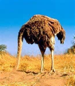 photo with ostrich sticking his head in the sand - Bing Images
