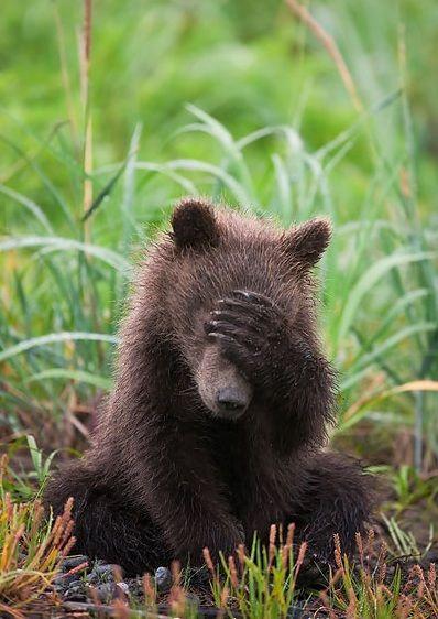 [Jeu] Association d'images - Page 3 6135574a4e13d051e8e7479591326fa5--cute-bears-baby-bears