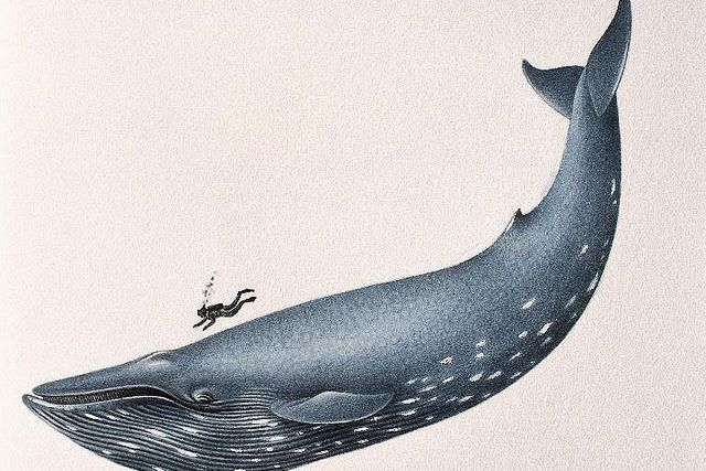 illustration of a blue whale and a person