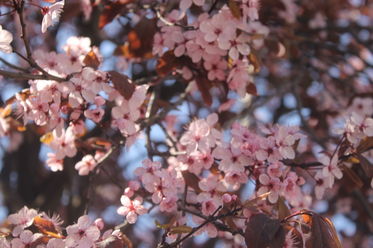 primavera, explosión de color....