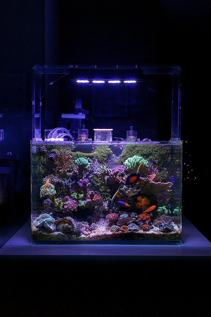 Bunster    Congratulations to community member Bunster and his 25 gallon  reef aquarium for being selected for our January Reef Profile!  His nano reef aquarium features an incredible mix of coral and spectacular fish. Below is the aquarium p...