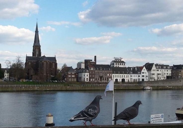 Tauben an der Maas, Maastricht - Foto: S. Hopp