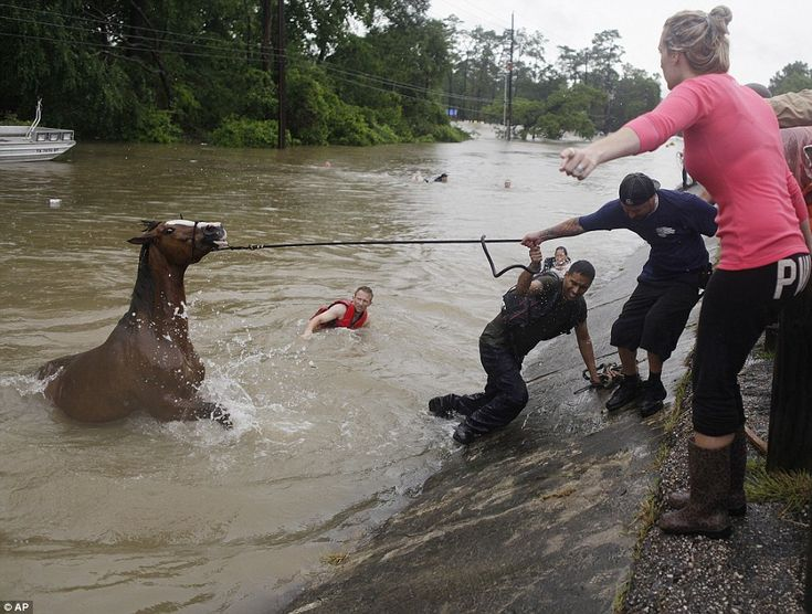 At least five people have died in flooding in Houston, Texas, (pictured on Monday) where a month's worth of rain fell in just one hour