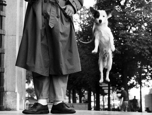 Elliott Erwitt - France, Paris,1989  From'Elliott Erwitt. Retrospective' at Kunst Haus Wein, Vienna