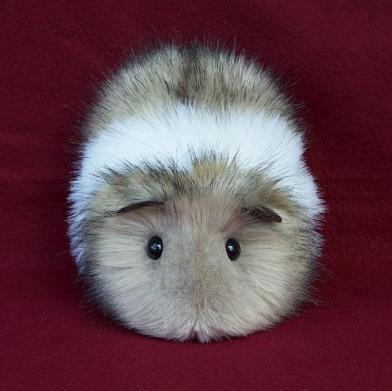 Guinea pig.....rather cute