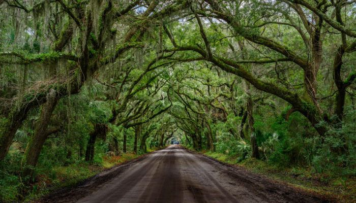 9  Positively Magical Tree Tunnels In South Carolina That Will Take Your Breath Away