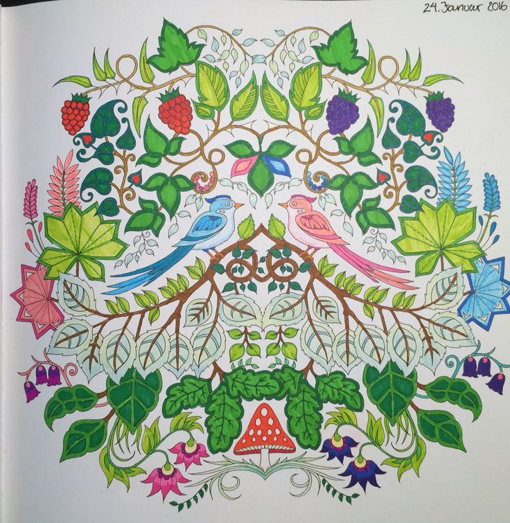 two birds sitting next to each other, with berries and leaves around From Johanna Basfords 'enchated forest'