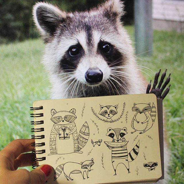 Good morning to everyone Day 91 of #The100DayProject Raccoon. #100DaysOfDrawingThingsInDifferentVariations #notabook by yuliia_bahniuk