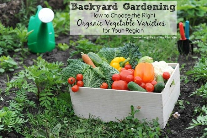 Backyard Gardening: How to Choose the Right Organic ...