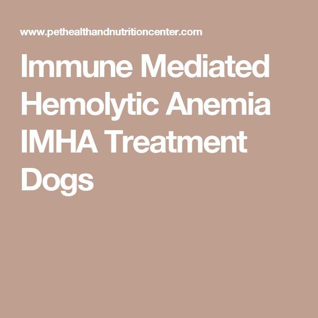 Immune Mediated Hemolytic Anemia IMHA Treatment Dogs