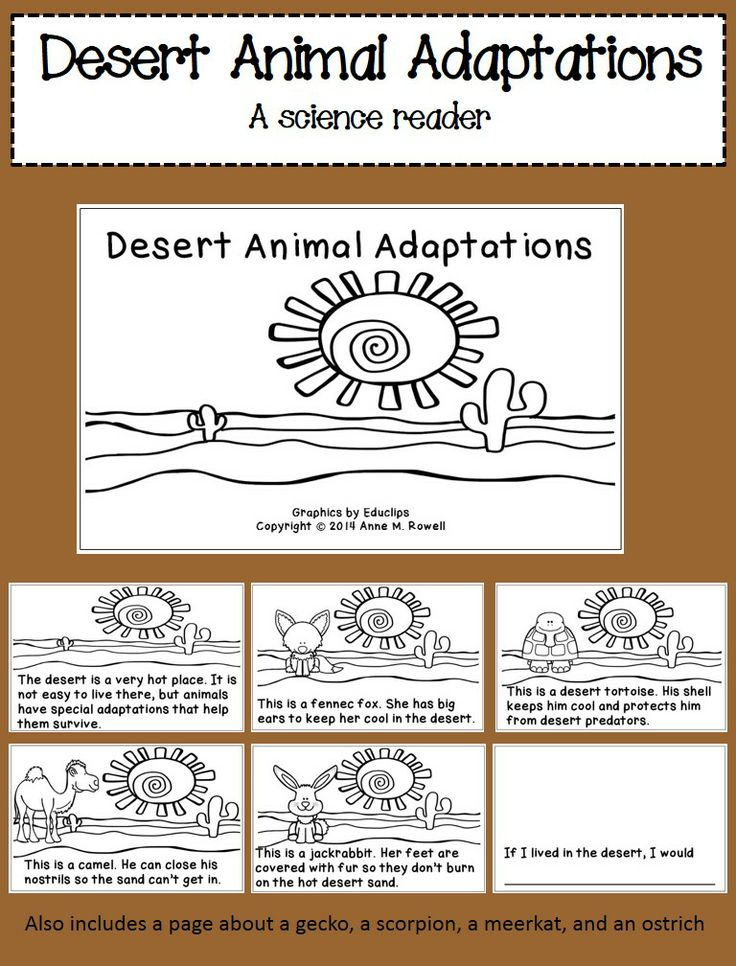 A science reader and coloring book about desert animal adaptations. The last page is interactive so the kids can write and illustrate their own page.