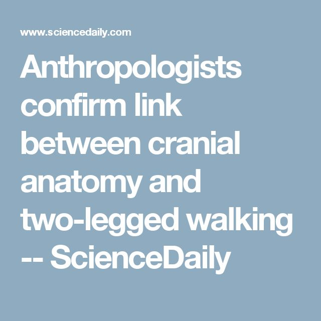 Anthropologists confirm link between cranial anatomy and two-legged walking -- ScienceDaily