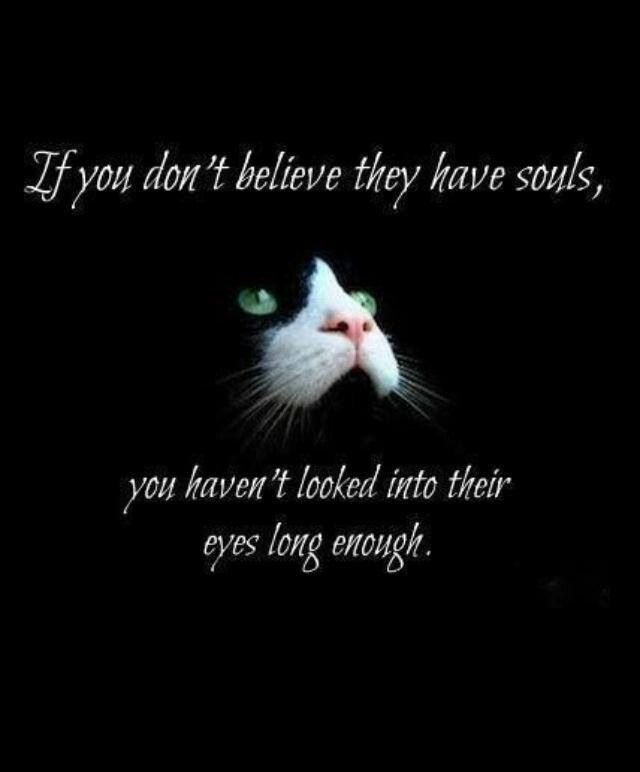 If you don't believe they have souls you haven't looked into their eyes long enough!