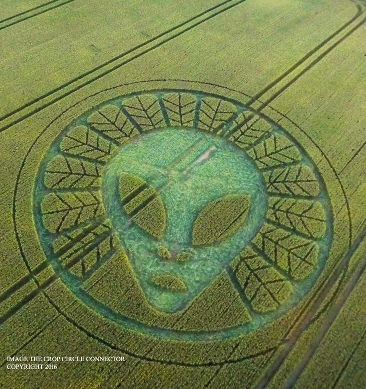 alien crop circles 2017 - photo #3