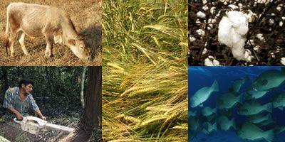Wij eten,wonen ergens,verplaatsen ons .. . Voor al deze activiteiten verbruiken wij natuurlijke hulpbronnen.Als we meer van deze bronnen gebruiken dan ze leveren,veroorzaken we de aantasting en de uitputting ervan.De ecologische voetafdruk wordt op deze basis berekent.Dit bv: per land,per persoon .. . De voetafdruk drukt uit hoeveel aardoppervlakte er nodig is om onze levensstijl mogelijk te maken.