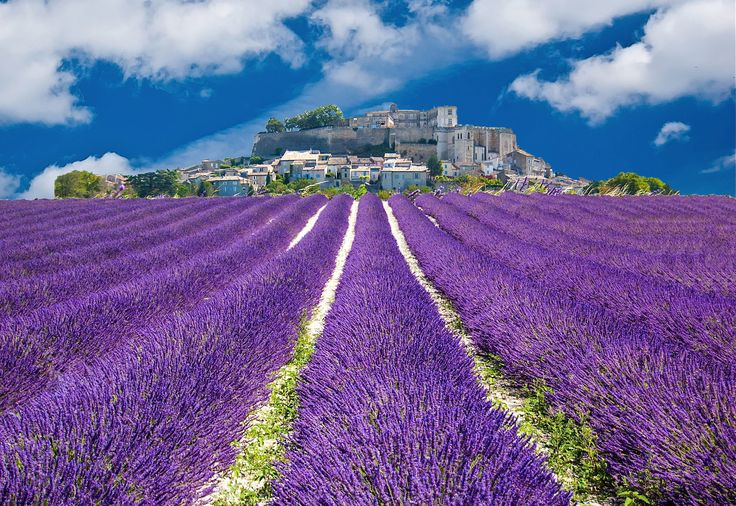 The lavender season is absolutely stunning in #Provence in #France. Summer is the best time to go and there are low cost flights on offer to Marseille: http://www.bravofly.com/offers/flights/marseille