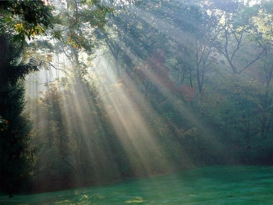 sunbeams, glowing light, peaceful & serene a grassy hide-away