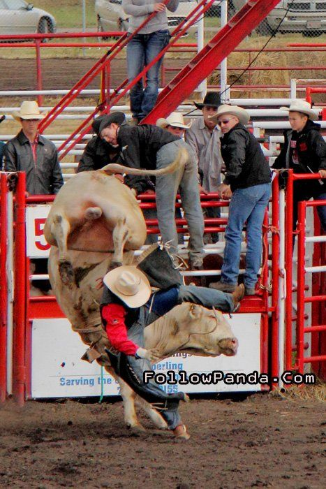 Angry Bull Riding at Teepee Creek Stampede Rodeo Event - County of Grande Prairie, Alberta, Canada | FollowPanda.Com