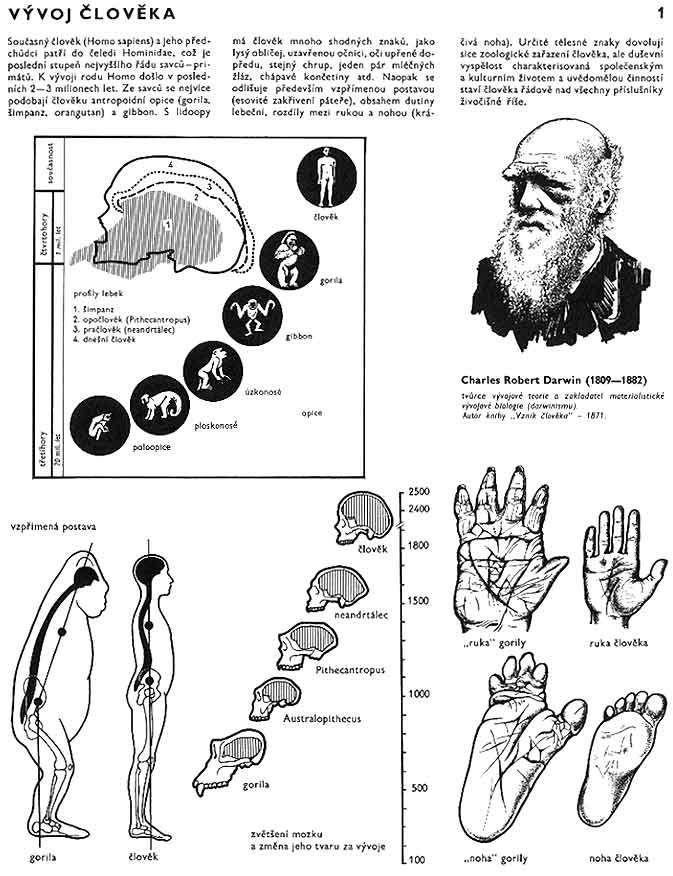 Vývoj Člověka V Obrazech - Yahoo Image Search Results