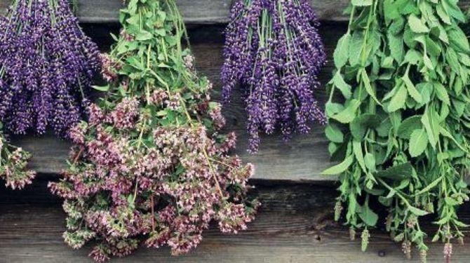 Zásady, s ktorými budú mať bylinky správnu farbu, chuť a vôňu