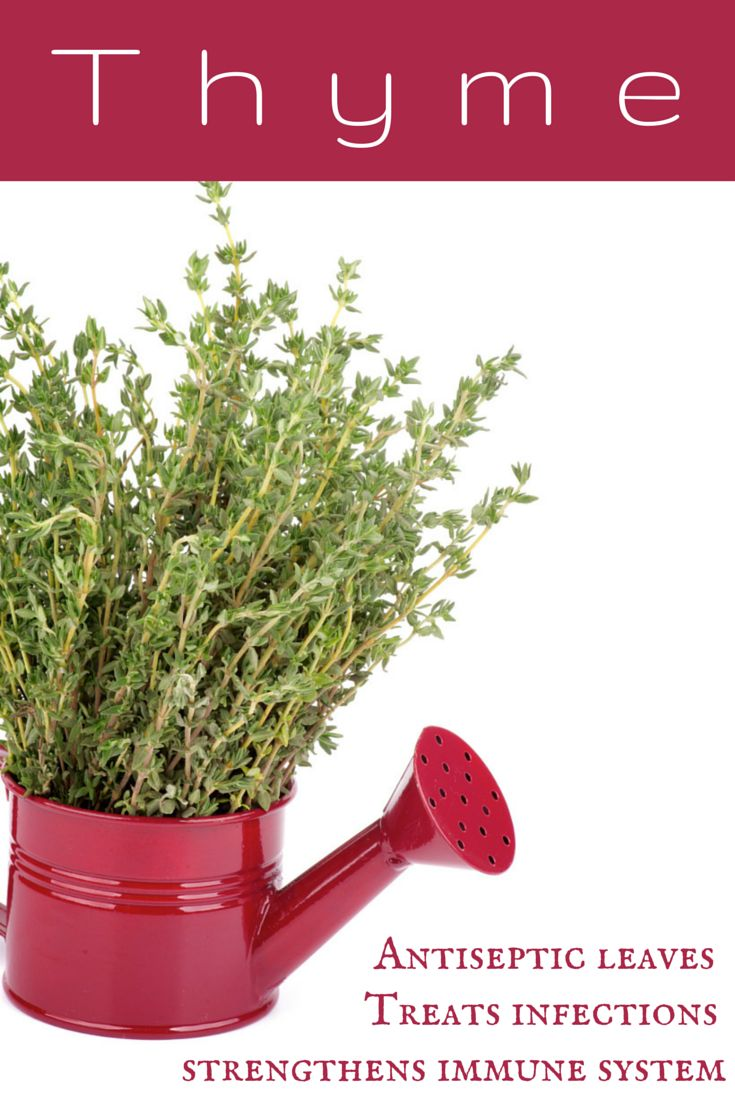 Thyme has strongly antiseptic leaves that contain thymol which helps treat throat and chest infections.