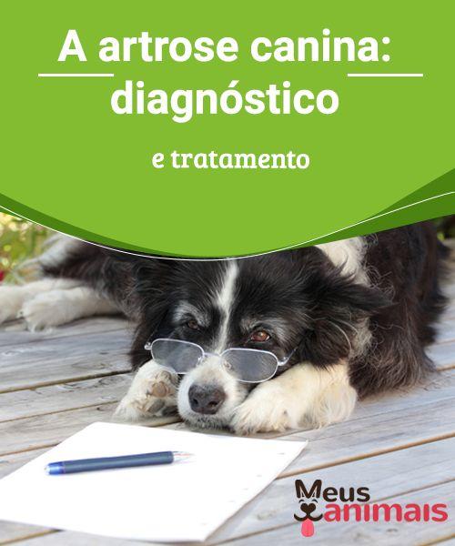 A artrose canina: diagnóstico e tratamento  A artrose #canina é uma doença degenerativa das #articulações, sendo a causa de dor #crônica mais comum nos cães. Ela é produzida, em maior medida, em cães mais velhos, mas a obesidade faz com que os cães mais #jovens também possam desenvolver esta #doença. #SAÚDE