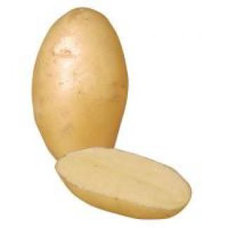 "Nicola Potatoes Nicola Potatoes are a fabulous ""all purpose Potato"" that have skin and flesh that are creamy yellow in colour. When cooked, these delightful spuds have a creamy/buttery flavour that lend themselves to be served in many ways, includ"