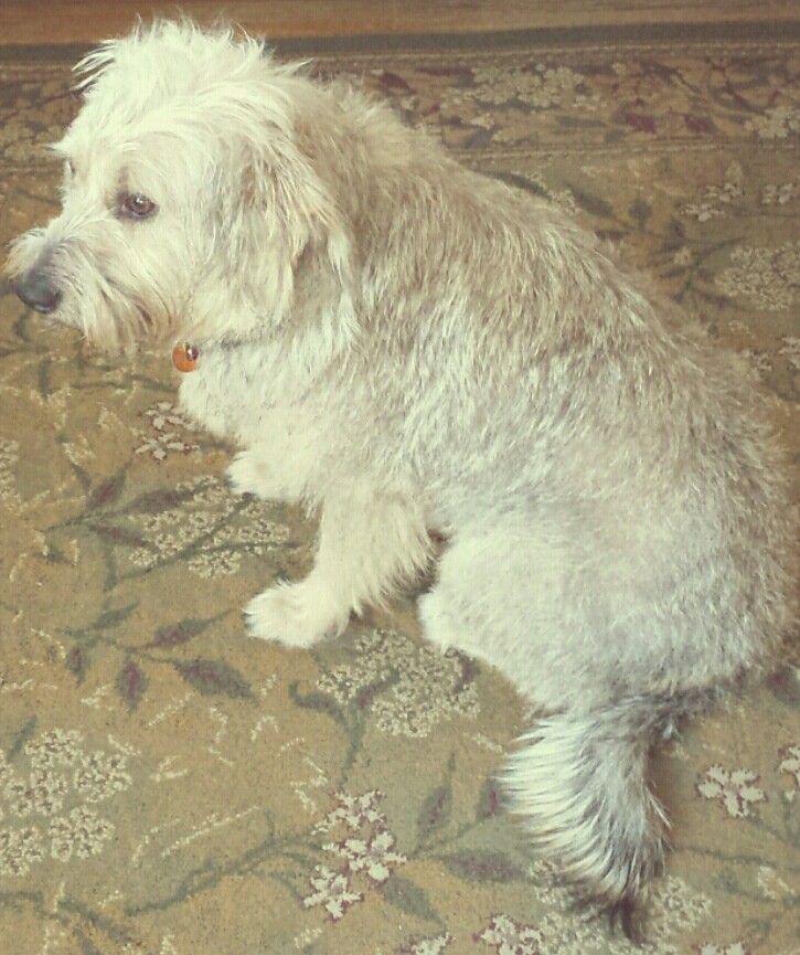 Dog Grooming Prairieville La