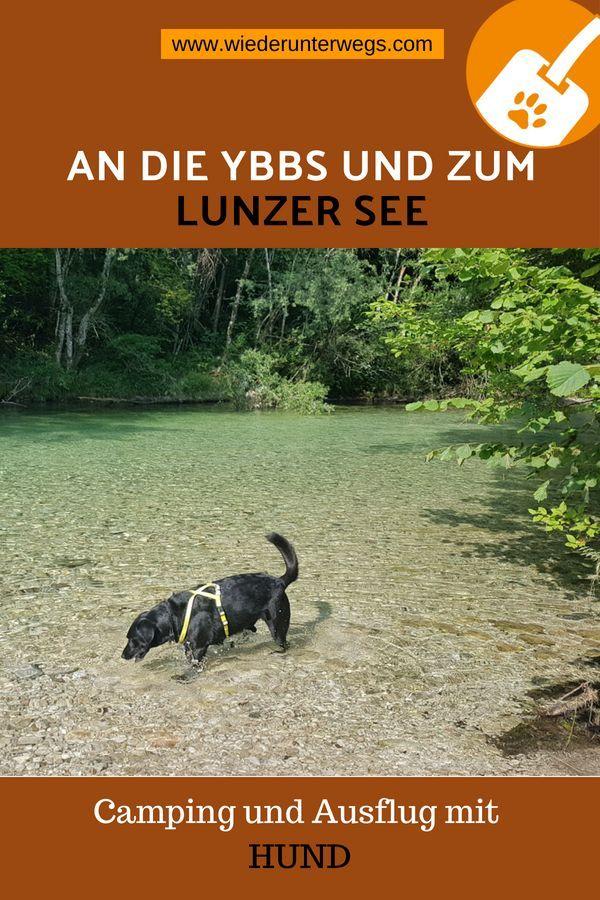 Erfrischender Hunde Ausflug Von Der Ybbs Zum Lunzer See In 2020 Ausflug Hund Reisen Urlaub Mit Hund Osterreich