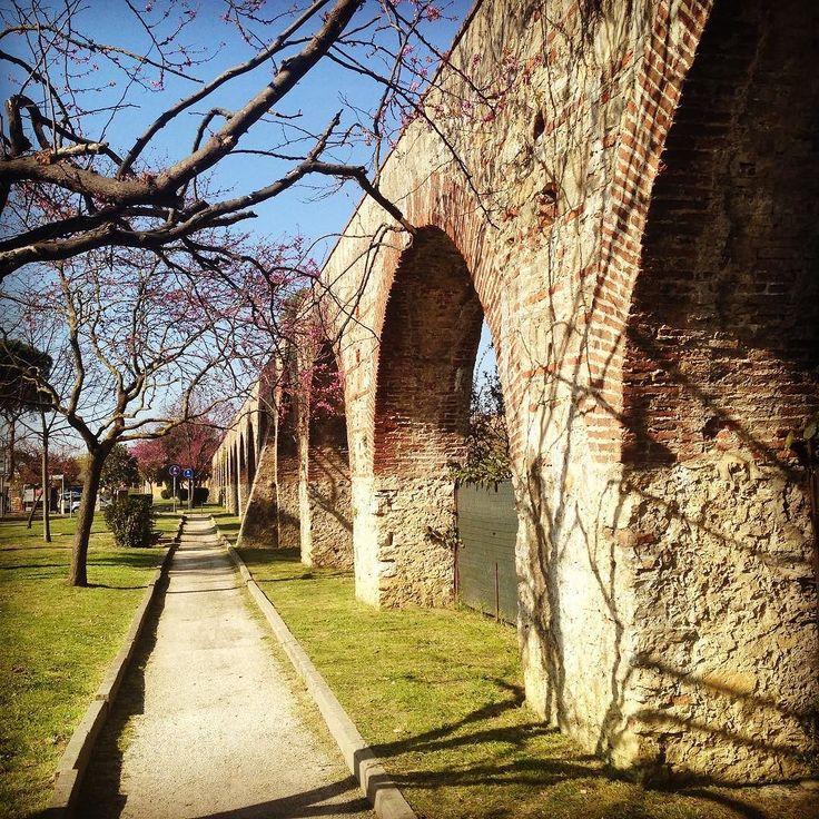 #buongiorno la #primavera è bocciata a #Pisa ricordatevi che la nostra #città è piena di #fiori. #buongiornataatutti by hotellapacepisa
