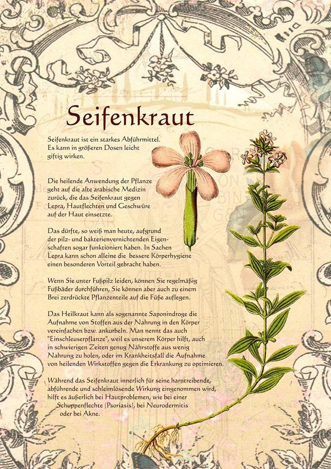 Seifenkraut http://www.kraeuter-verzeichnis.de/