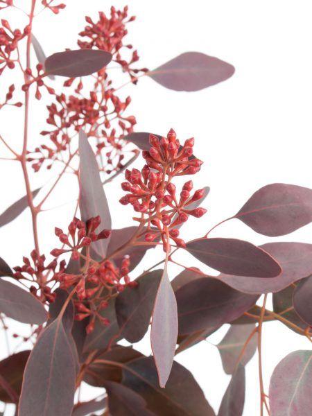 ber ideen zu rote hochzeitsblumen auf pinterest hochzeitsblumen rote hochzeit und. Black Bedroom Furniture Sets. Home Design Ideas