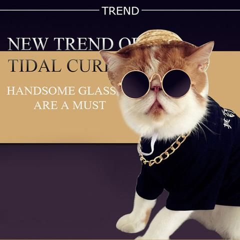 Whether your pet is studious, quirky,trying to look like one of the Beatles, or dressing up as Harry Potter...these glasses are show stoppers indeed!  Choose the best pet glass for your pet!! Buy Now !!  #petglasses #cutepets #cats #dogs #accessories #petaccessories  #yourbestpetshop #petsupplies