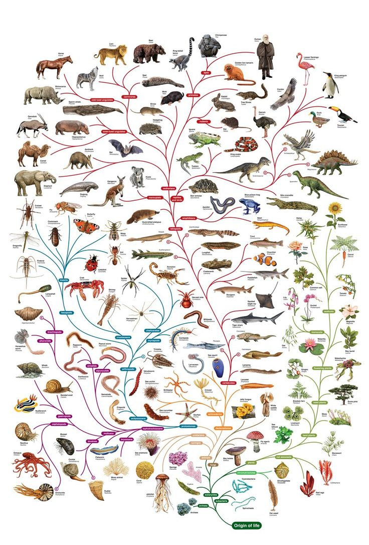 Tree of Life. Charles Darwin, science, biology.