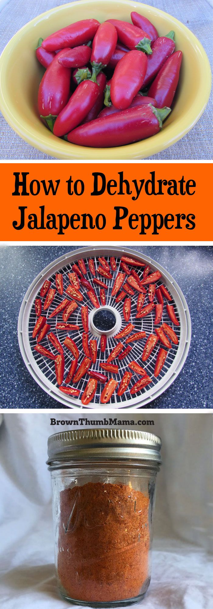 Too many jalapenos? No such thing! It's easy to dehydrate jalapeno peppers and use them to spice up taco seasoning mix, chili, refried beans, and more.