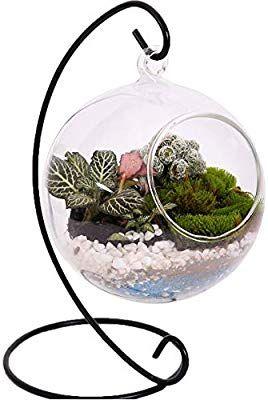 Amazon Com 10l0l Charming Clear Hanging Glass Ball Vase Air Plant Terrarium Kit Succulent Flowerpot Co Air Plant Terrarium Terrariums Kits Plant Display Ideas