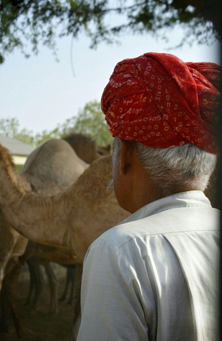 Kamelifarmi Camel Farm