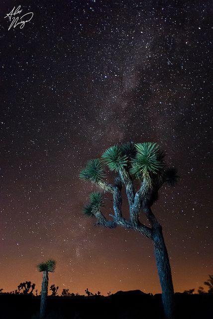 Milky Way over Joshua Tree National Park, California