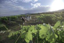 Tamburlaine Organic Wines