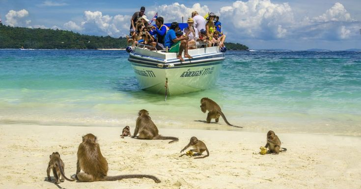 Monkey Beach in Thailand is filled with monkeys you can play with | Metro News
