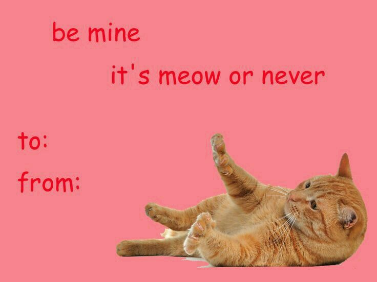 someone needs to stop me valentines that will make ppl or cats like you part disclaimer - Cat Valentine Cards