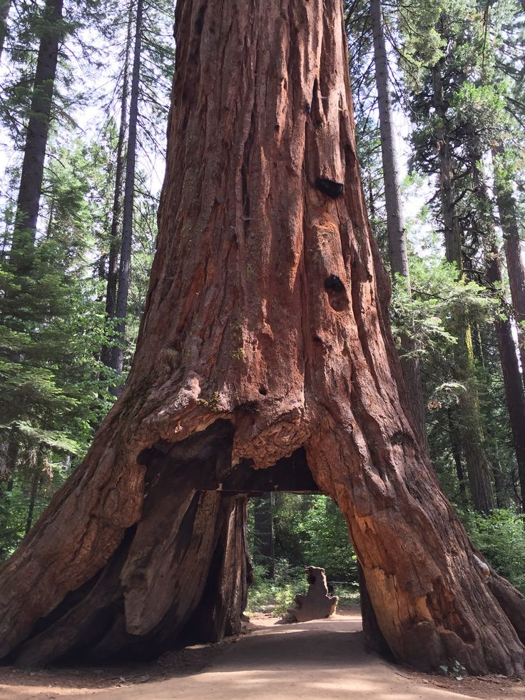 Calaveras Big Trees State Park in Arnold, CA